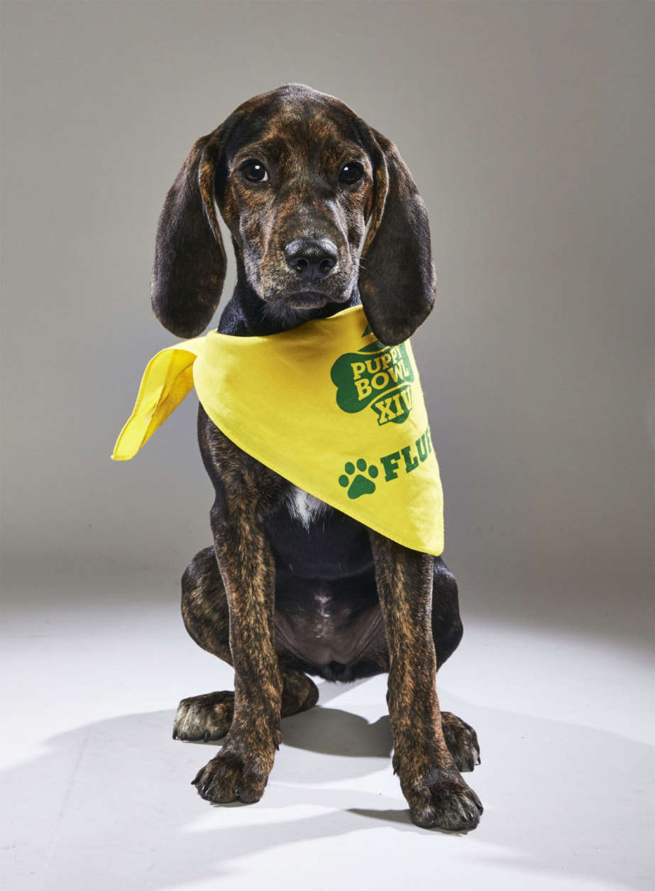 Sally from City Dog Rescue. (Courtesy Animal Planet)