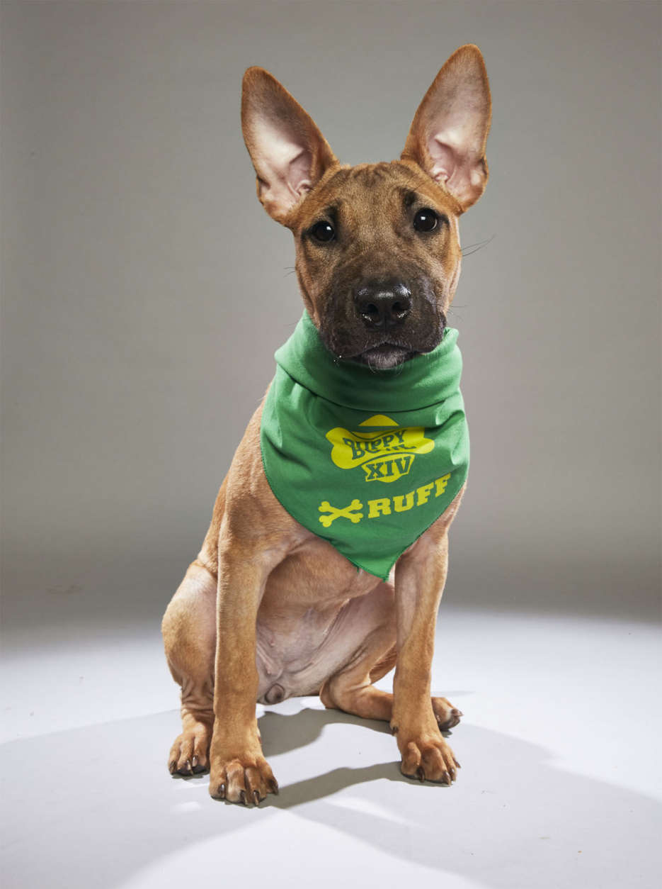 Savannah from Harley's Haven Dog Rescue. (Courtesy Animal Planet)