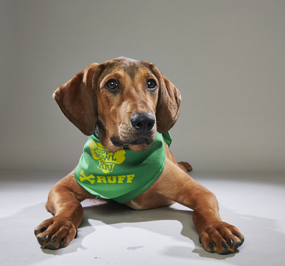 Barry from the Nashville Human Association (Courtesy Animal Planet)