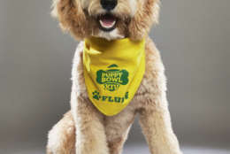 Sophie from Green Dogs Unleashed. (Courtesy Animal Planet)