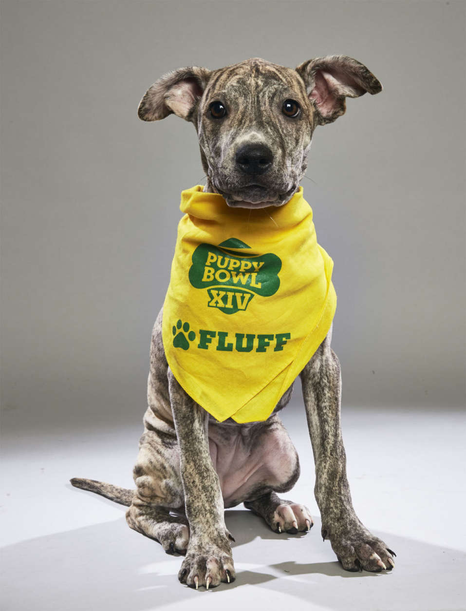 Sunny from All But Furgotten. (Courtesy Animal Planet)