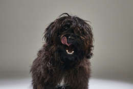 Tyler from Shaggy Dog Rescue. (Courtesy Animal Planet)