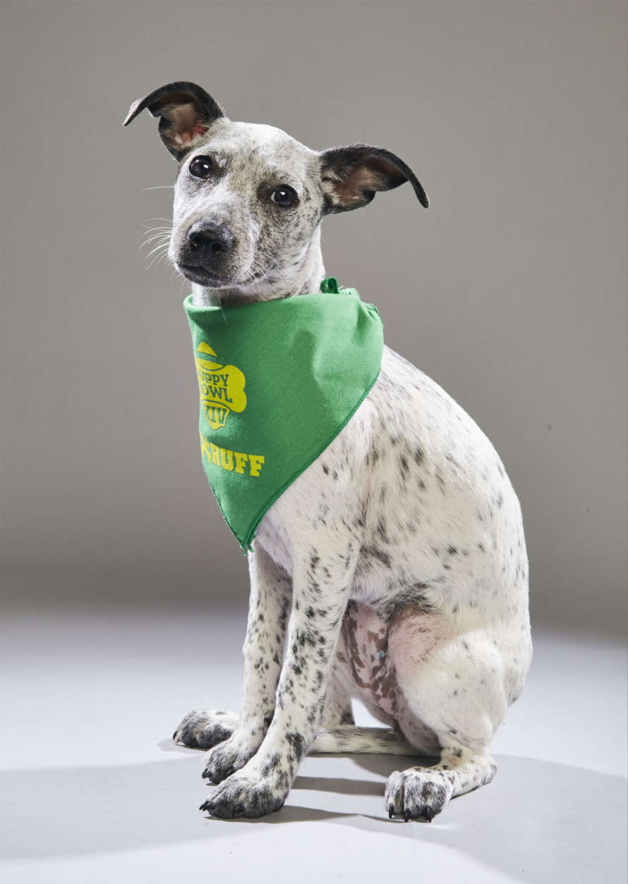 Miss Brie from Anti-Cruelty Society of Chicago. (Courtesy Animal Planet)