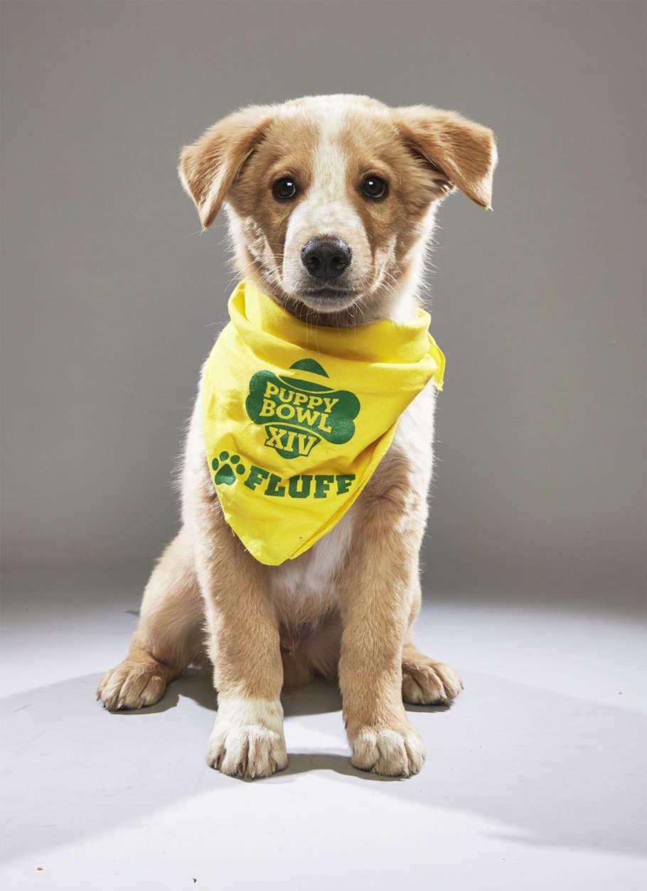 Vaughn from Colorado Animal Welfare. (Courtesy Animal Planet)