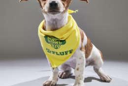 Lila from the Morris Animal Refuge Team. (Courtesy Animal Planet)