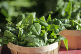 """A diet full of refined sugars and artificial ingredients won't do your brain any favors. Masley said food is """"really the essence of the good decisions we make."""" Choose foods loaded with pigments, such as berries, cherries and green leafy vegetables.  (AP Photo/J. Scott Applewhite)"""