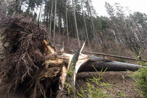 Training to focus on risk from storm-damaged trees