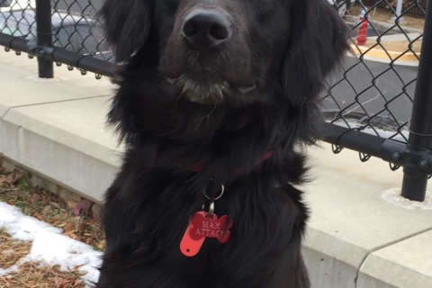 Fairfax County police want to find owner of rescued dog