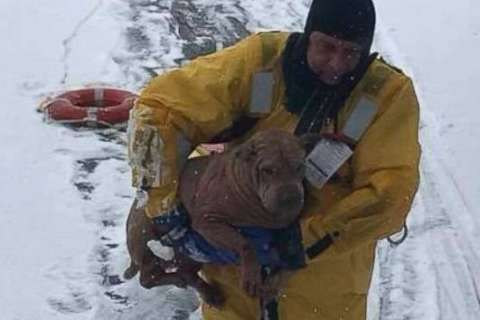 New Jersey firefighters wade into frozen lake to rescue dog