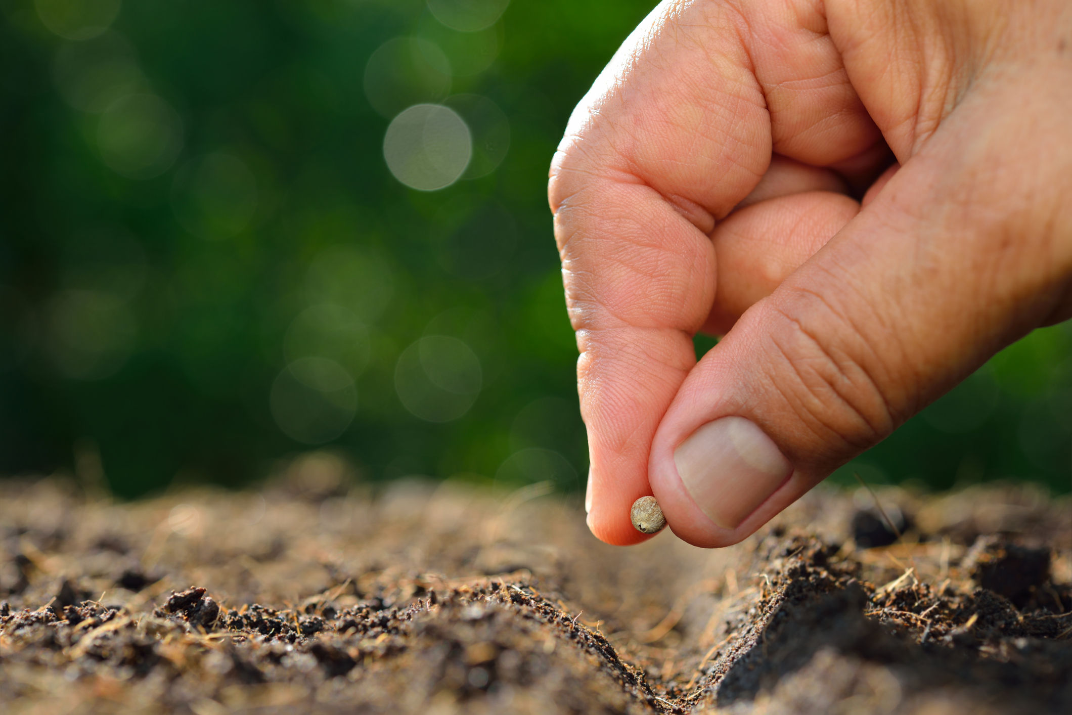 Do S And Don Ts Of Growing From Seeds Wtop