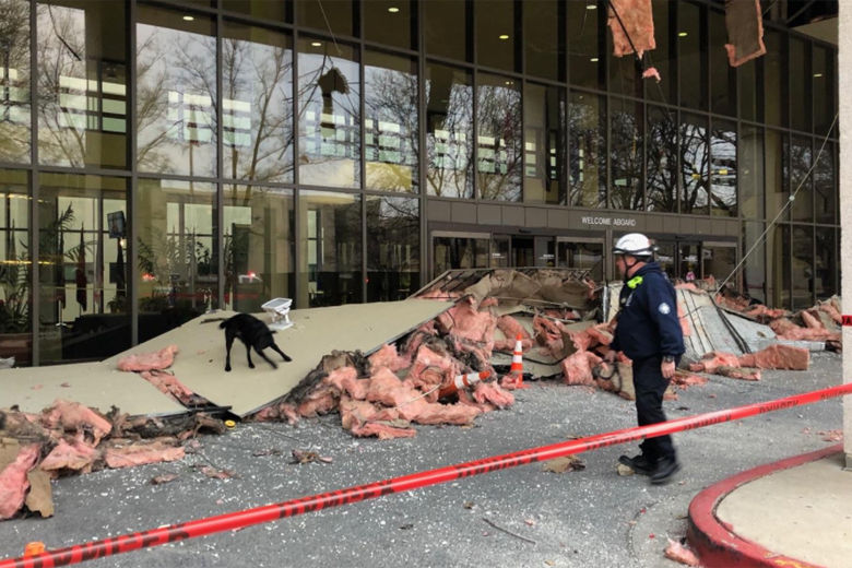 Photo shows a dog on top of a collapsed overhang at Walter Reed