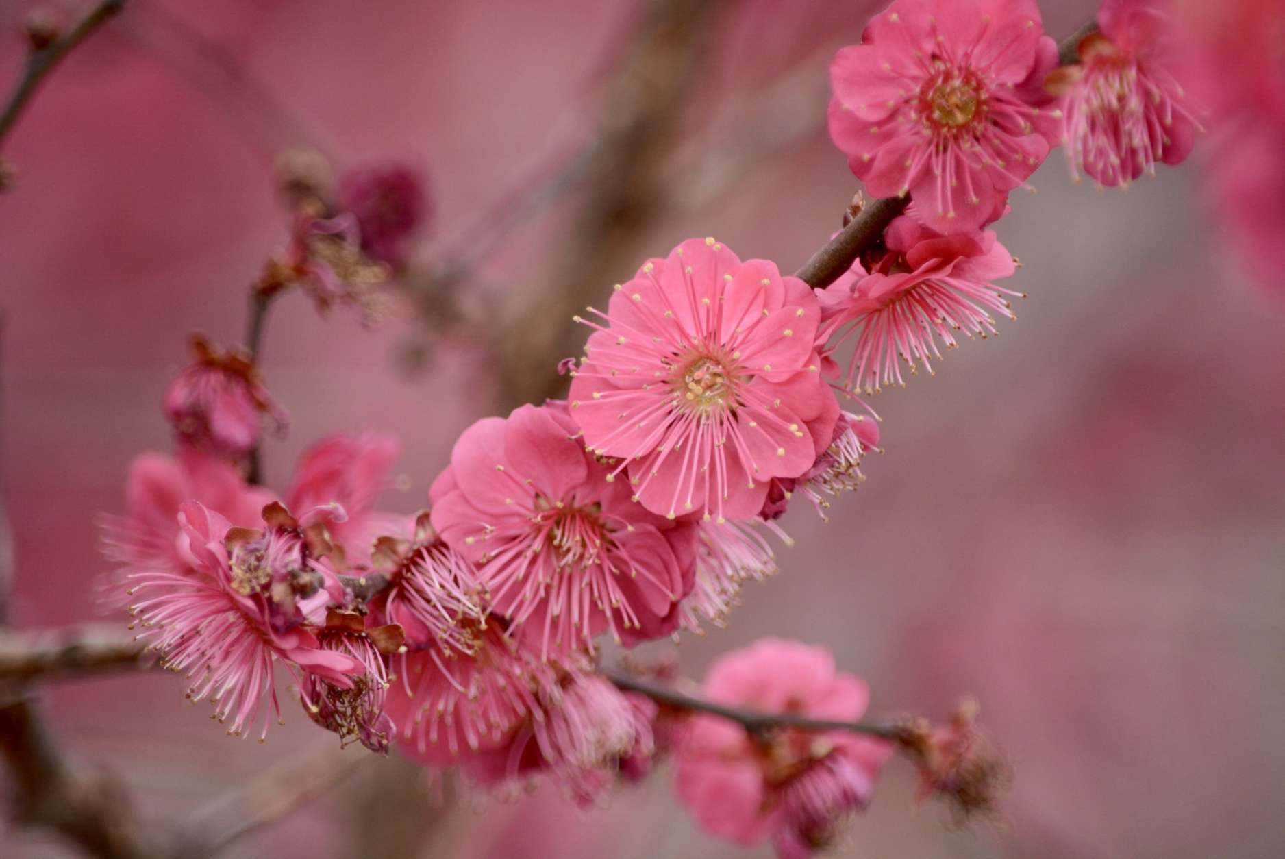 Cherry blossoms or not, there's already spring color on the Mall | WTOP