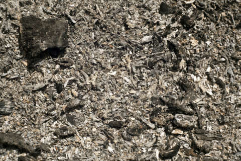 Using wood ash in your garden? A little goes a long way