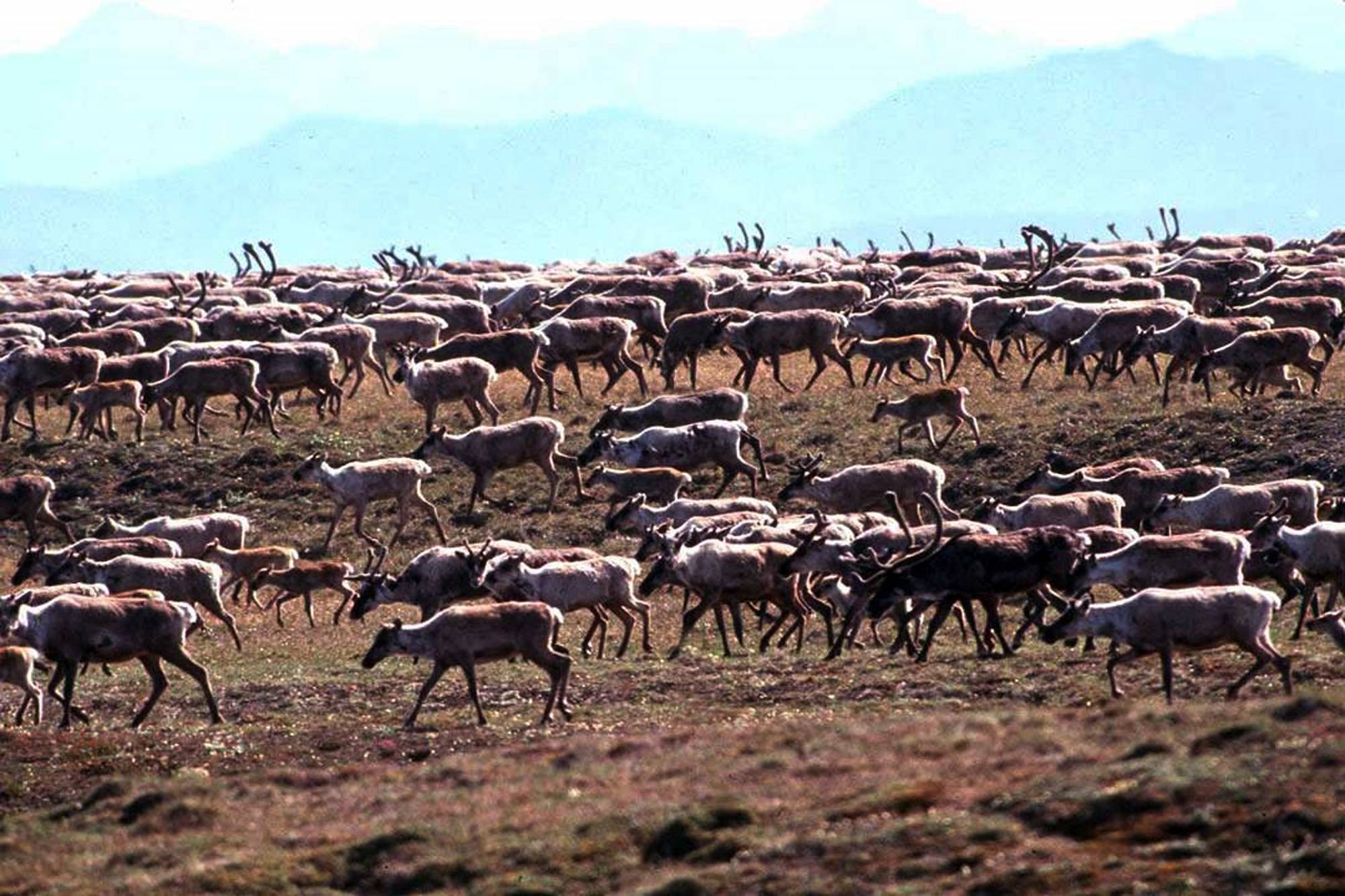 an overview of president bushs plan to open the arctic national wildlife refuge to oil drilling The arctic national wildlife refuge to drilling — a his quest to open up the arctic national wildlife refuge to president george w bush.