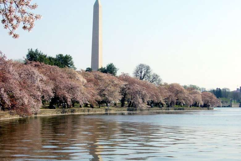 National Park Service to announce peak bloom for Cherry Blossoms