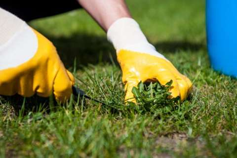 Labor Day weekend is perfect time to get started on fall lawn care