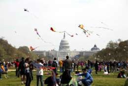 The Blossom Kite Festival is set for Saturday, March 31, from 10 a.m. to 4:30 p.m. on the National Mall. (Courtesy National Cherry Blossom Festival)