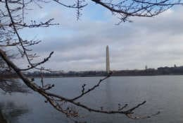 The fog gives way to balmy temperatures in D.C. on Feb. 20, 2018. (WTOP/Kathy Stewart)