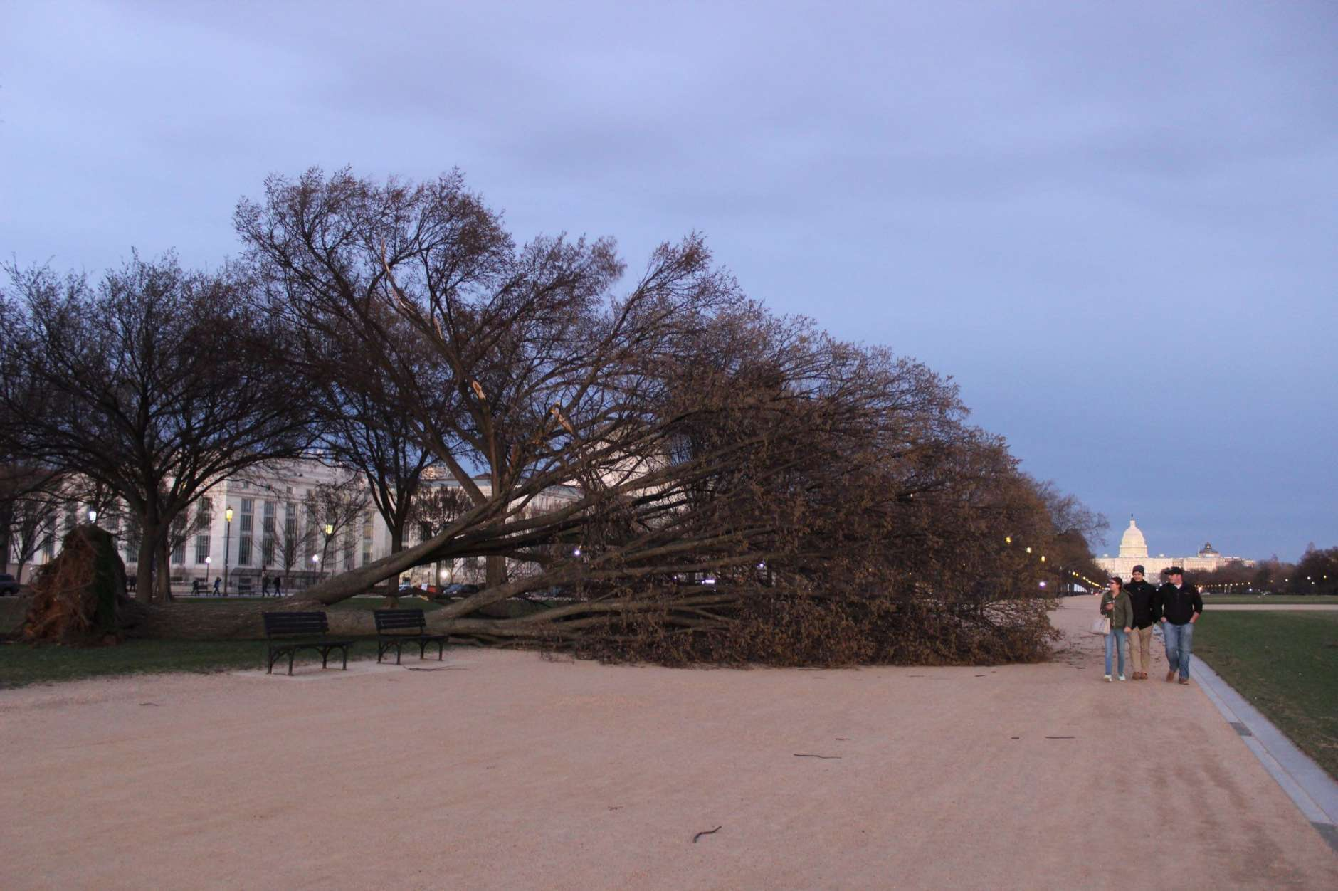 A downed tree lays across part of the National Mall on Saturday. (Courtesy Jim Havard)