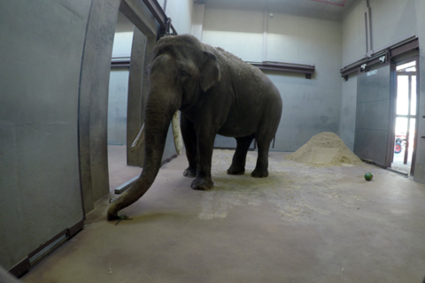 He packed his trunk: Male Asian elephant arrives at National Zoo