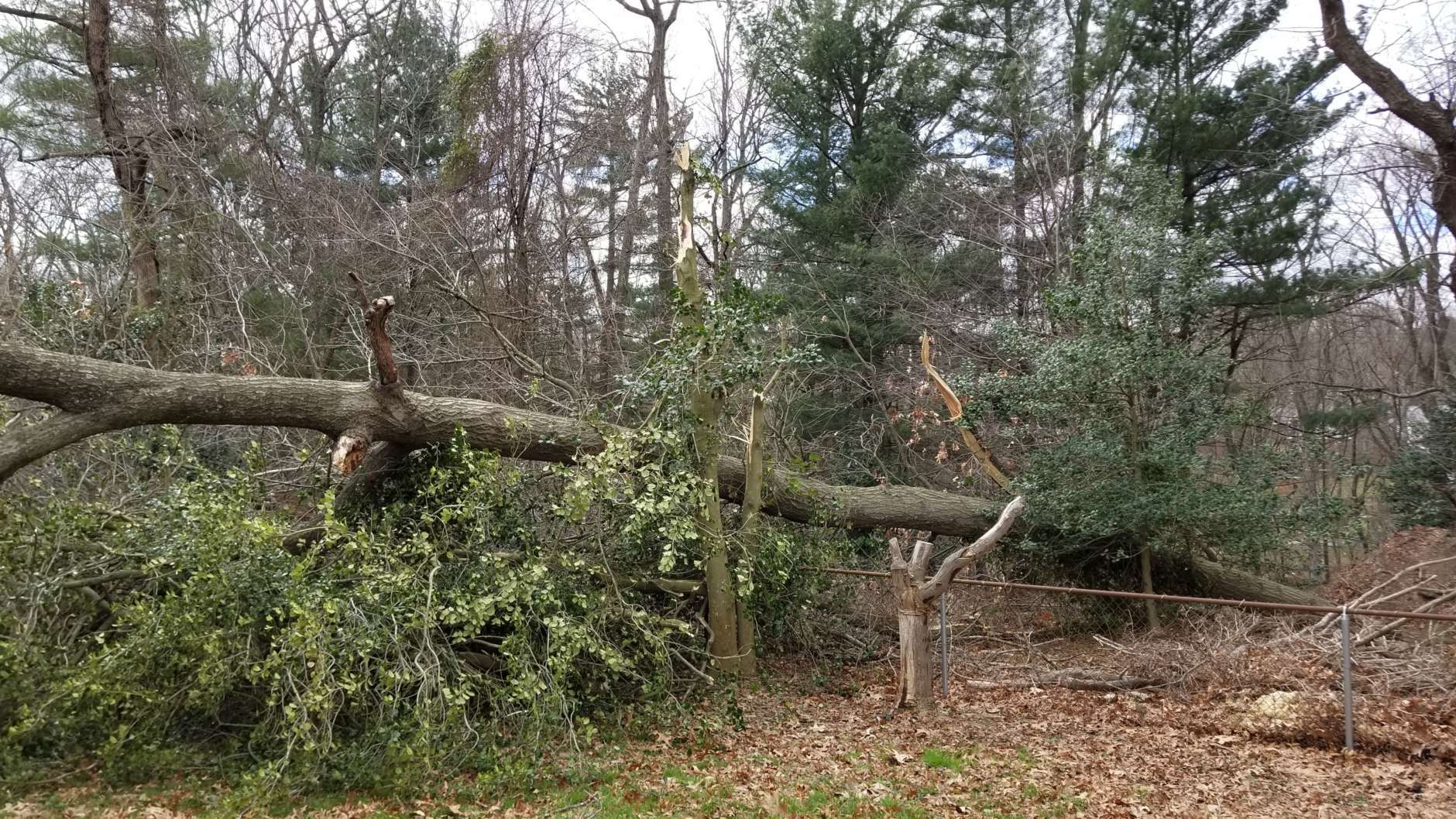 A downed tree just missed a Silver Spring house on Friday. No one was injured. (Courtesy Dar Maxwell)