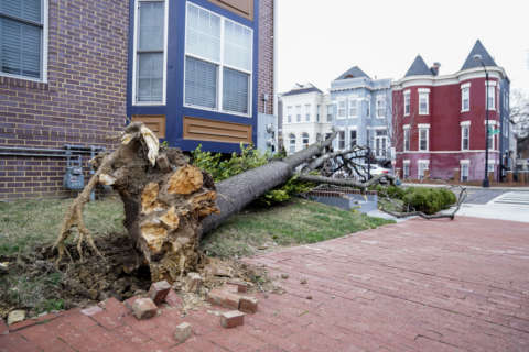 Clean up operation underway after high winds hit DC area