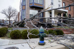 A tree is blown over as the region experiences high winds, Friday, March 2, 2018 in Washington. (AP Photo/Andrew Harnik)