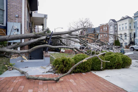 Friday storm brings record wind to DC