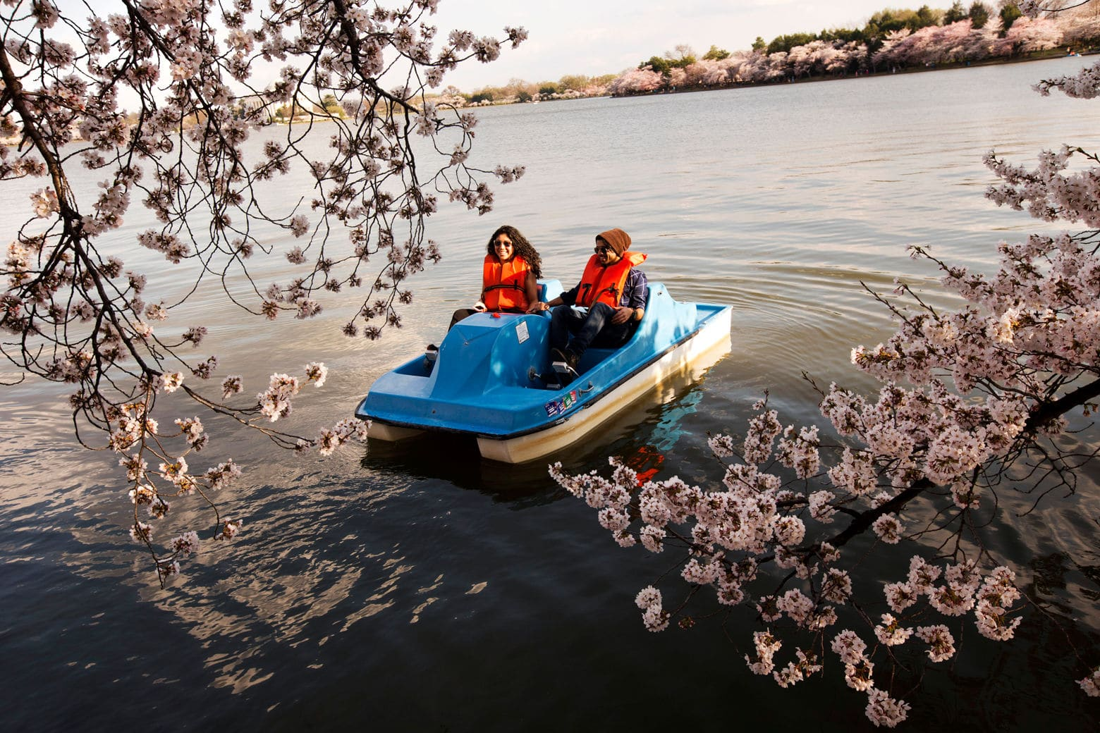Helen Gonzales, 21, left, and Wagas Noor, 21, both of Washington, paddle boat among hanging cherry blossoms in bloom at the tidal basin in Washington, Wednesday, April 9, 2014. (AP Photo/Jacquelyn Martin)