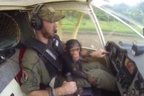 WATCH: Rescued baby chimpanzee snuggles with pilot en route to sanctuary