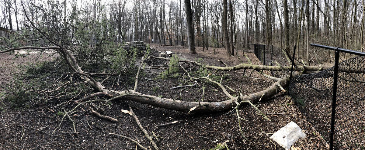 Cabin John Dog Park fence was smashed by fallen trees in the D.C. area. (Courtesy Andrew Lih via Twitter)