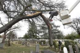 Jacob Corbin, in bucket, and Mike Smith, lower right, with Corbin Tree Service work on sawing limbs that fell off a tree during a wind storm in Mount Hebron Cemetery in Winchester, Va. on Friday March 2, 2018. Trees were downed and power outages were reported all over the area due to the high winds.   (Ginger Perry/The Winchester Star via AP)