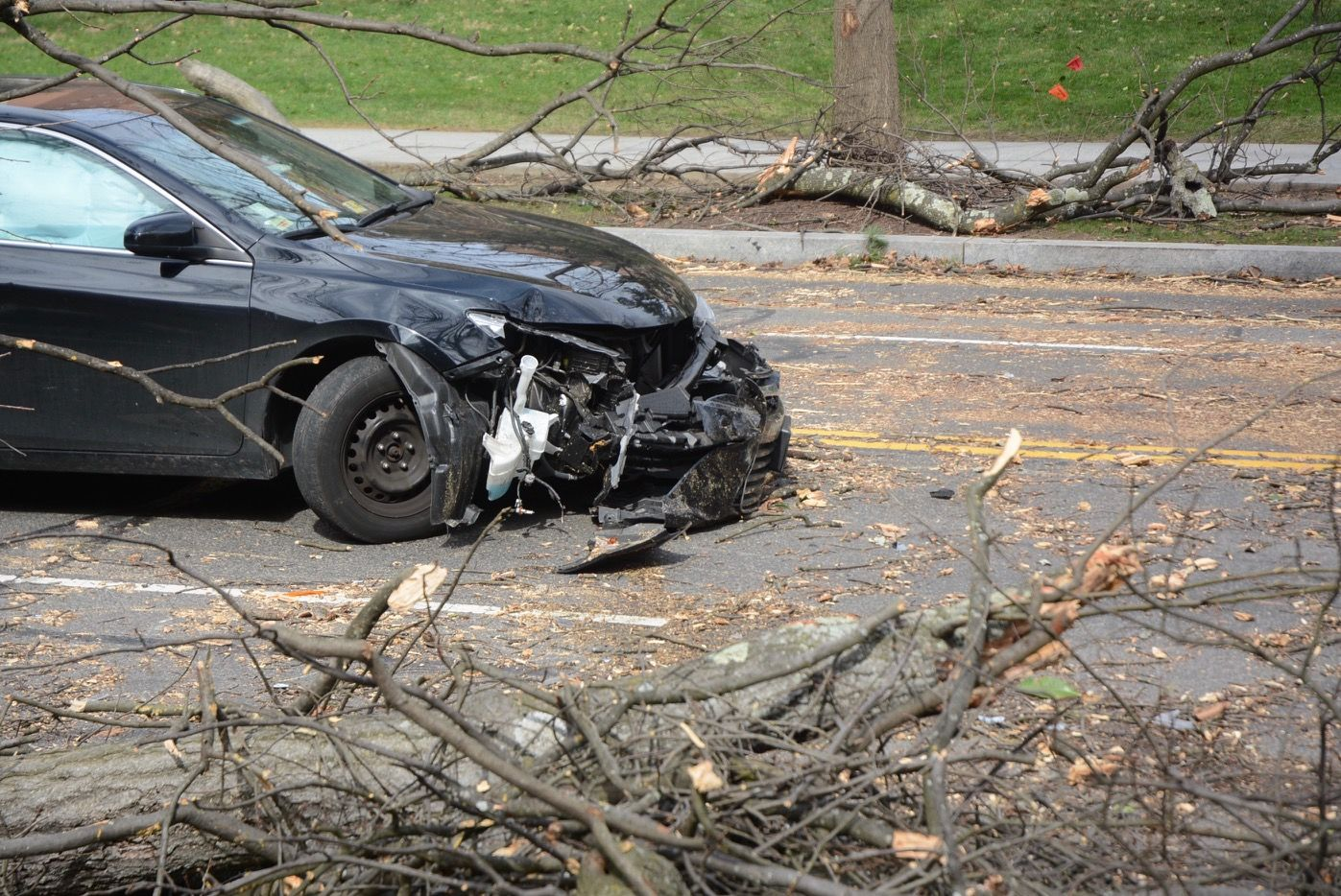 Some drivers who parked under trees during the high wind warning won't like what they see when they decide to hit the road. (WTOP/Dave Dildine)
