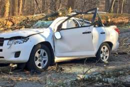 The downed tree left the driver with life-threatening injuries. (Courtesy D.C. Fire and EMS)