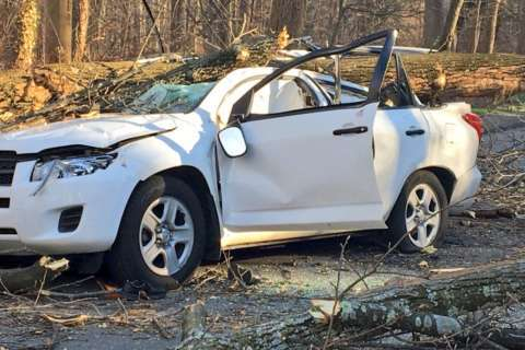 Md. man dies after wind-downed tree lands on car in DC