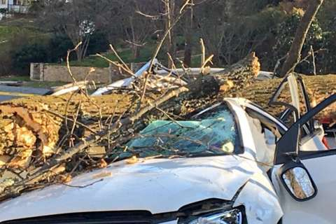 Driver critically injured when wind-downed tree lands on car in DC