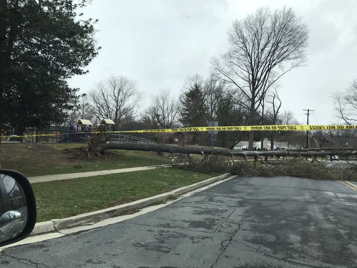A downed tree by Burning Tree Elemenatry in Bethesda, Maryland. (Courtesy Casey Johnson via Twitter)