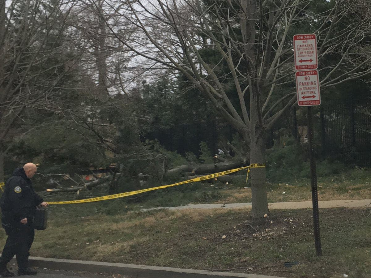 A big tree came down inside the southern edge of the Naval Observatory grounds and split open the fence. (Courtesy Jeremy Pelofsky via Twitter)