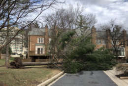 A downed tree blocks a drive way in the D.C. area. (Courtesy IC via Twitter)