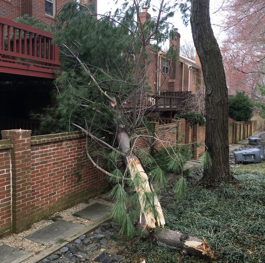 Downed tree and over turned garbage cans in the D.C. area. (Courtesy Endiseli Kil via Twitter)