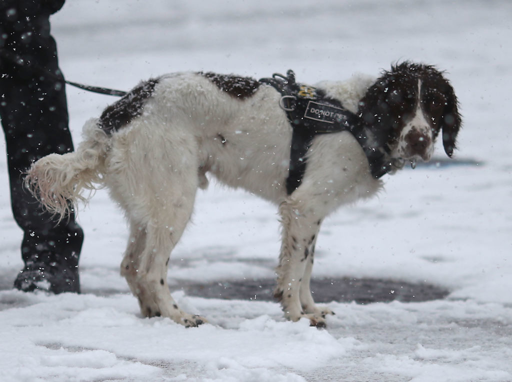WASHINGTON, DC - MARCH 21:  Snow falls as a K9 member of the U.S. Secret Service stands guard in front of the White House on March 21, 2018 in Washington, DC. The East Coast is experiencing a fourth nor'easter in recent weeks. (Photo by Mark Wilson/Getty Images)