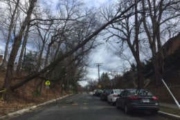 Police tape blocks off a road with a hazardous storm-damaged tree on Idaho Avenue in D.C. (WTOP/Darci Marchese)