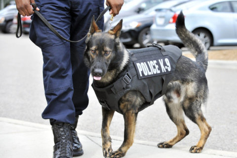 Ceremony will honor military, police and service dogs