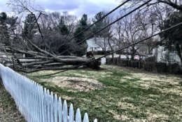 A tree knocked down by the wind at Queen Street and Ferry Road, pulling down power lines and a pole in Leesburg, Virginia. (WTOP/Neal Augensten)