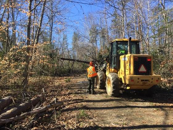 Prince William Forest Park will be closed for weeks in order to clean up and repair damage from Friday's windstorm. (Courtesy National Park Service)