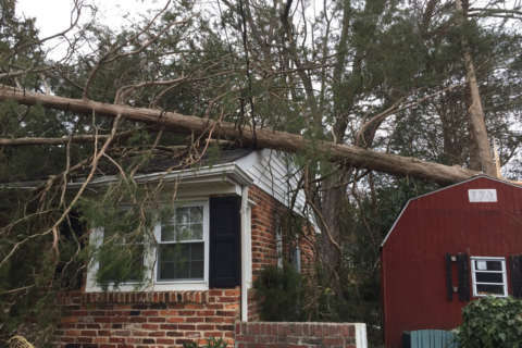 Insurance expert's advice on claims after windstorm: Be patient and proactive