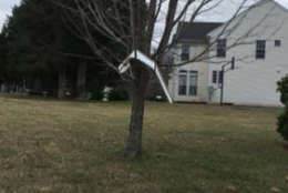 A piece of siding in a tree in Warrenton, Virginia. (Courtesy Tish Devere)