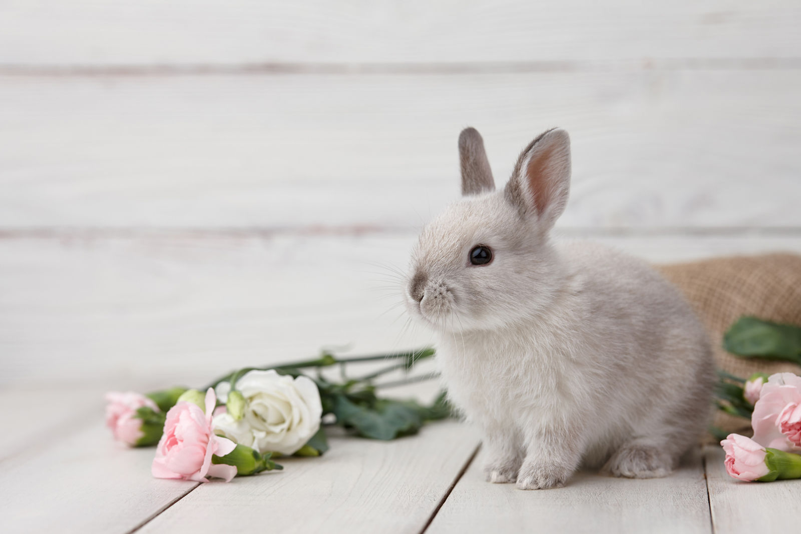 How to keep your garden safe from 'wascally wabbits' | WTOP