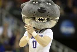 KANSAS CITY, MO - MARCH 22:  Willie the Wildcat the Kansas State Wildcats mascot performs during the second round of the 2013 NCAA Men's Basketball Tournament at the Sprint Center on March 22, 2013 in Kansas City, Missouri. (Photo by Ed Zurga/Getty Images)