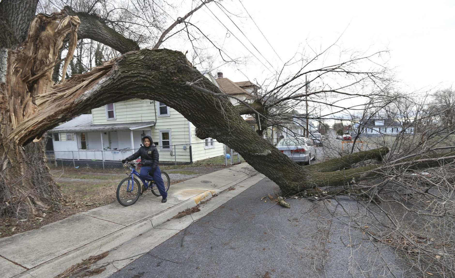 Tristan Boughton checks out a large limb that fell off a tree and blocked a street in his Winchester, Va. neighborhood on Friday March 2, 2018.  The wind storm caused downed trees and powerlines and closed area schools.   (Ginger Perry/The Winchester Star via AP)